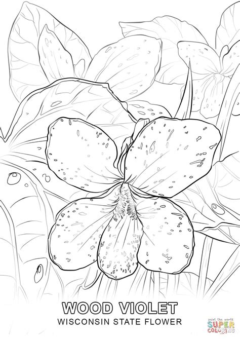 wisconsin state flower coloring page free printable