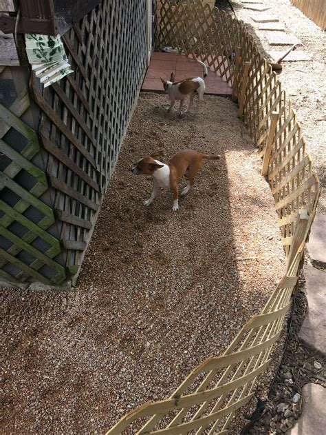 outdoor dog bathroom build an outdoor dog potty area and save your grass from