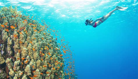 dive places diving calabria the 5 best places where to snorkel and dive