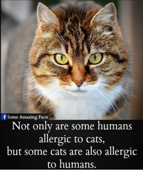 Cat Facts Meme - 25 best memes about cats are cats are memes