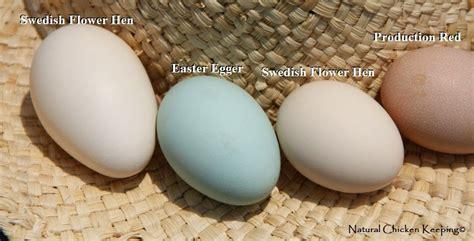 sweden egg chicken keeping breed overview sk 229 nsk