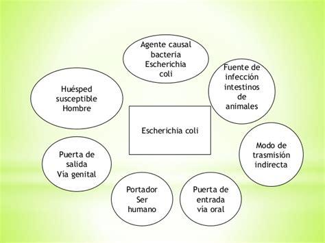 cadenas epidemiologicas - Cadena Epidemiologica Shigelosis