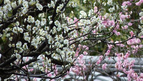 yumi est au japon les jardins zen de kyoto aromandise