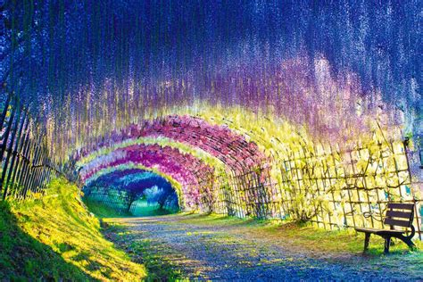 japan flower tunnel a colorful walk wisteria tunnel at kawachi fuji gardens