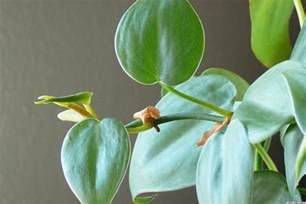 best house plants 10 best houseplants to purify the air photos huffpost uk