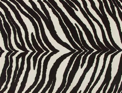 zebra like pattern zebra facts animals blog