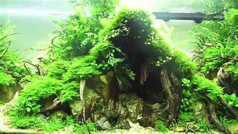 Aquascaping Techniques by L Aquarium De Julien Voultoury Iaplc 2014 Ada Takashi
