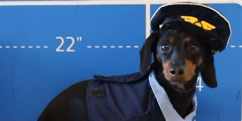 crusoe the crusoe the dachshund and friends take to the skies huffpost uk