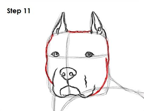 how to pitbull puppies how to draw a pit bull