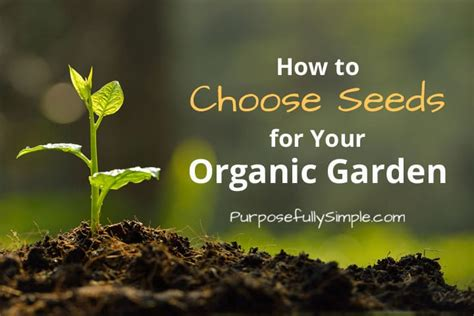 how to start an organic garden in your backyard how to buy seeds for your garden