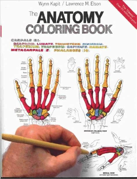 musculoskeletal anatomy coloring book free 91 the anatomy coloring book 3rd edition