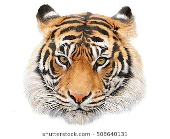 Royal Skin Real Mud Mask royal skin animal mask tiger daftar harga termurah dan