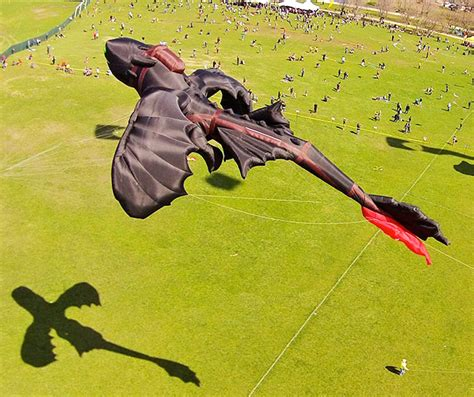 animali volanti un drago ed altri animali volanti kites
