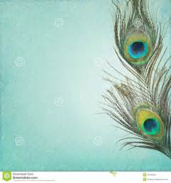Shabby Chic Wall Mural vintage background with peacock feathers stock photo