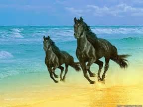 horse wallpapers softwaresandlife