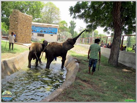 Karachi Search Karachi Zoo Images Search