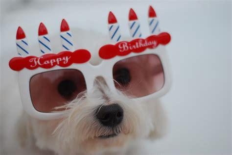 happy birthday puppy iwona j my care2