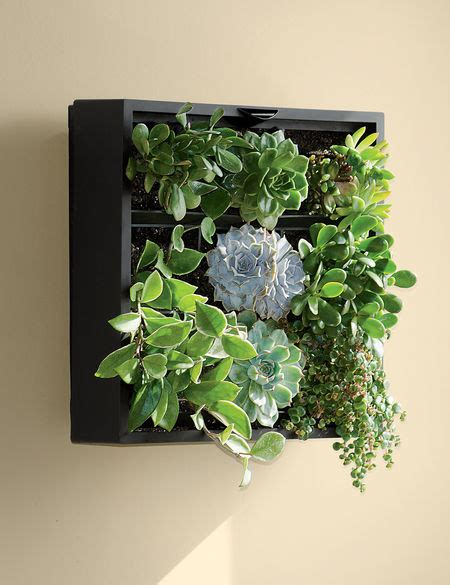 living wall planter green wall vertical garden