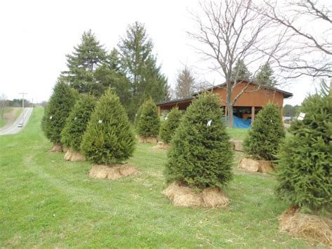 top christmas tree farms in harrisburg pa 10 magical tree farms in pennsylvania