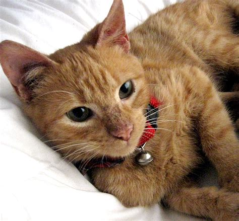 how long can a cat live natural cat care blog