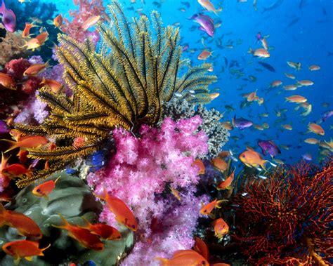 colorful ocean wallpaper download wallpaper 1280x1024 colorful sea fish hd background
