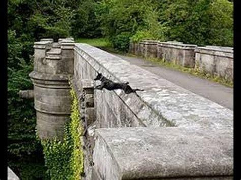 imagenes suicidas reales el puente de los perros suicidas videos de terror