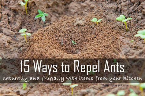 What Repels Ants In The Kitchen by 15 Ways To Repel Ants Naturally And Frugally With Items