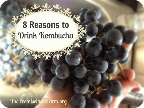8 Reasons To The by Eight Reasons To Drink Kombucha