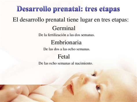 la vida fetal el psicolog 205 a del desarrollo primera etapa de vida prenatal