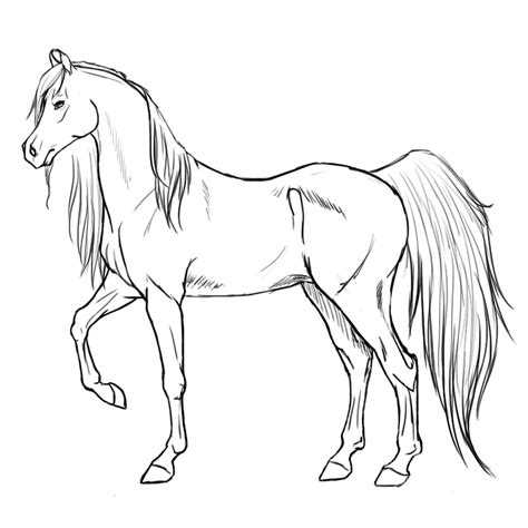 arabian horse coloring pages coloring coloring pages