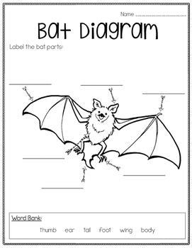 labelled diagram of a bat bat informational unit freebie by greatminds123 tpt