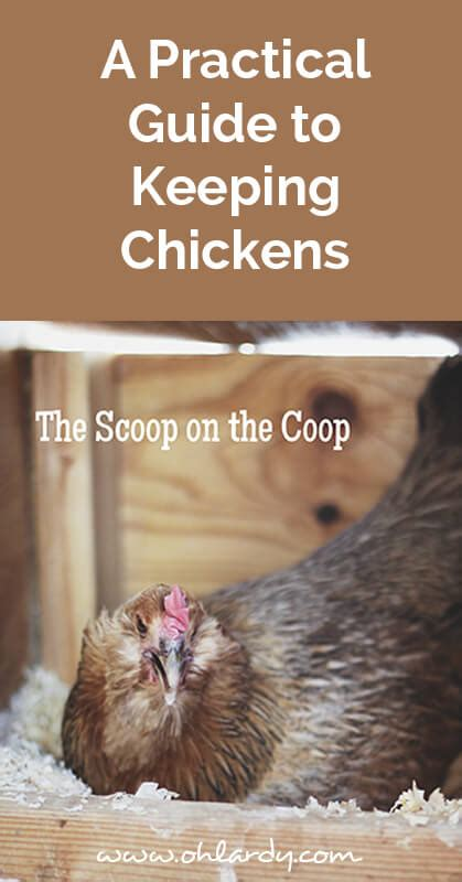 pheasant keeping for a practical handbook on the rearing and general management of aviary pheasants classic reprint books a practical guide to keeping chickens the scoop on the