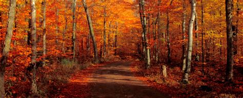 fall colors the best places to see the most beautiful door county fall