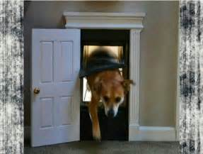 Doggie Door 10 Doggy Doors You Won T Be Ashamed To Display In Your