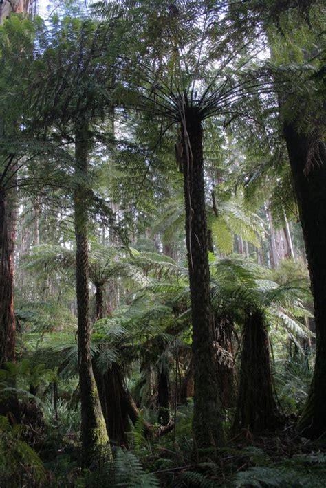 tree origination fern fossil data clarifies origination and extinction of