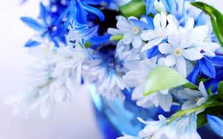 blue and white flower wallpaper wallpaperlepi