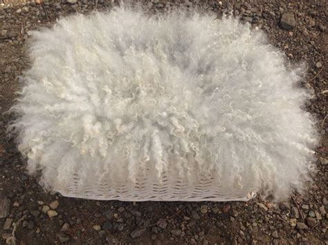 flokati rug photography prop 67 best images about flokati rugs felt furs photography props fluffy curly on