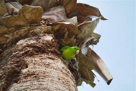 rio grande valley  glory  birds