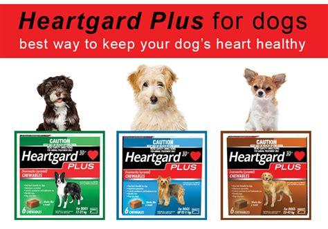 heartgard plus for dogs heartgard plus for dogs best way to keep your s healthy bestvetcare