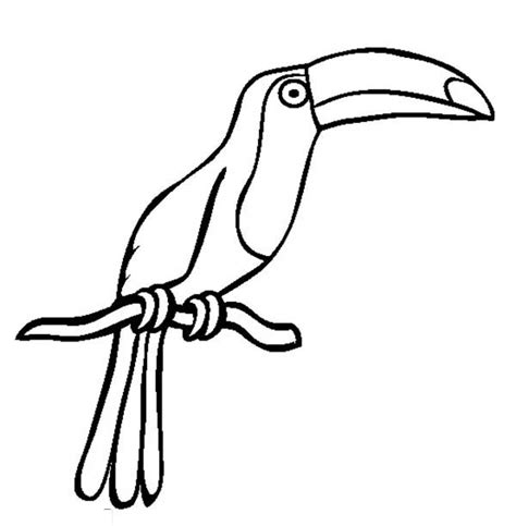 drawing of a toucan coloring page coloring sun