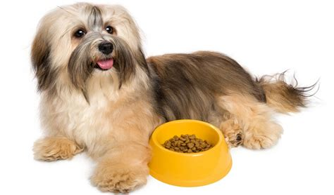 best food brands for puppies best food for puppies 28 images best food for maltese 10 vet recommended brands