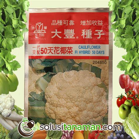 Bibit Biji Benih Sayur Bayam Hijau Tanaman Hias Bkn Bonsai Kebun 1 bibit sayur buah solusi tanaman