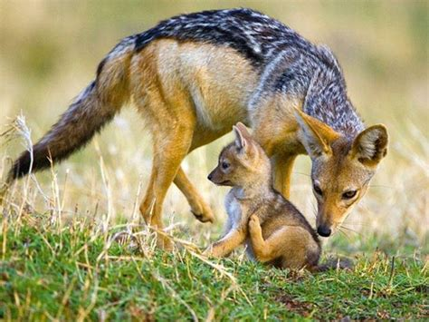 Imagenes Asombrosos De Animales | algunas fotos de animales asombrosos taringa