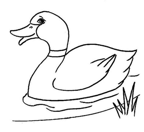 duck coloring pages forcoloringpages nursery room