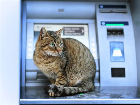 A Gift Card That Can Be Used Anywhere - bitcoin debit cards issued by bitfinex can be used at millions of atms coinfox