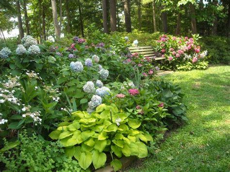 2 the romantic hydrangea a heron s garden