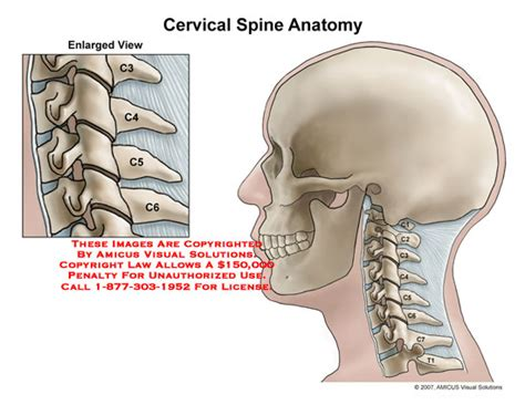spine c4 c5 diagram amicus illustration of amicus anatomy cervical spine