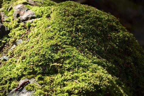 Moos Auf Steinen Vernichten 6156 by Moos Auf Steinen Vernichten Moos Auf Steinen Imagens E