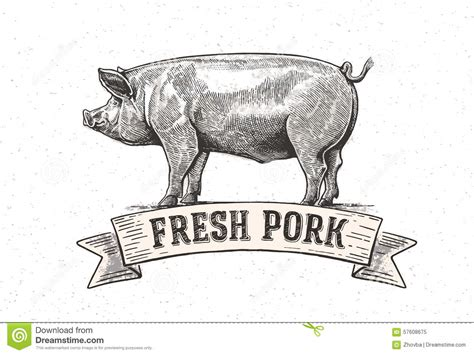 Sketch To Design A 3d Kitchen graphic pig stock vector image 57608675