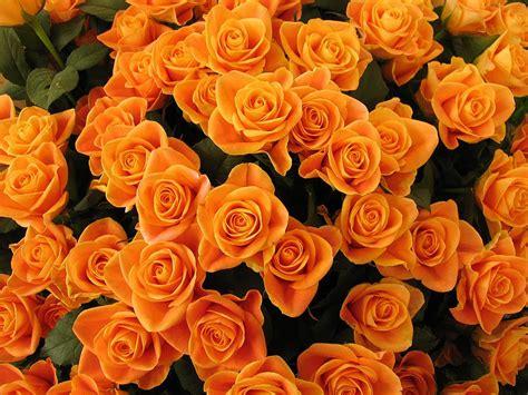 fiori le il simboleggiare dei fiori le tanti libri nel cuore